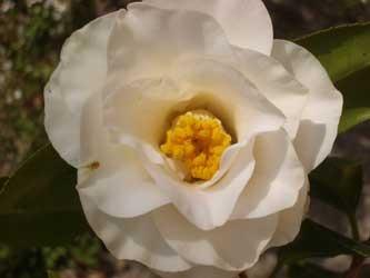 20060330白羽衣