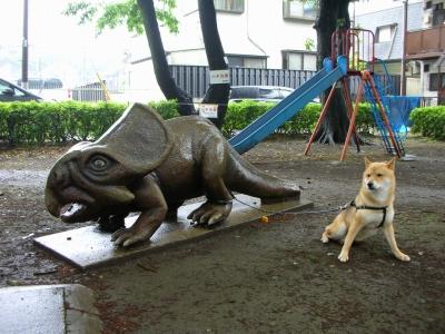 写真: プロトケラトプス?