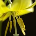 写真: 黄色の妖精