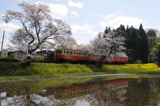 写真: 小湊鉄道の桜 2010 05