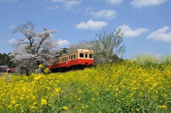 写真: 小湊鉄道の桜 2010 07