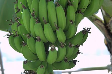 サンジャクバナナ