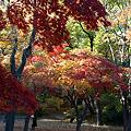 Photos: 美しき紅葉よ