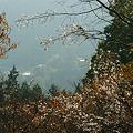 里山を守る冬桜