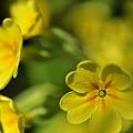 Photos: Yellow Fever