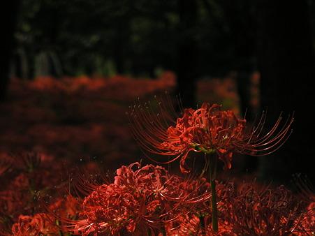紅(クレナイ)